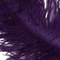 25-26in Long x 11-12in Wide Purple Ostrich Plumes/ Feathers