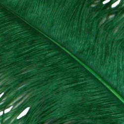 25-26in Long x 11-12in Wide Green Ostrich Plumes/ Feathers