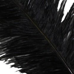 25-26in Black Ostrich Plumes/ Feathers