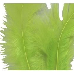 3in-7in Long Apple Green Craft Feathers