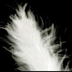 3in-7in Long White Craft Feathers