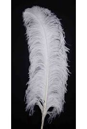 25-26in White Ostrich Plumes/ Feathers