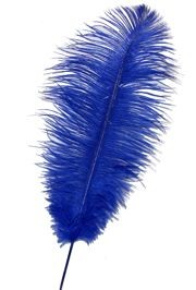 17in Blue Ostrich Plumes/ Feathers